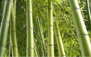 Moso Bambus Aktivkul.dk